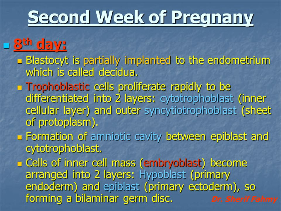 Second Week of Pregnany