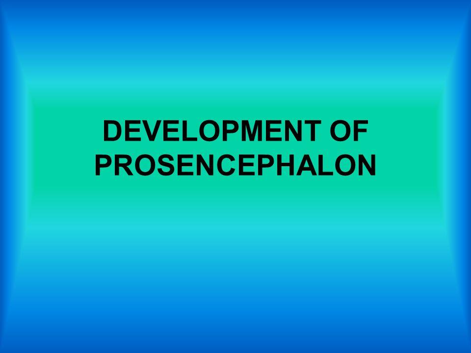 DEVELOPMENT OF PROSENCEPHALON