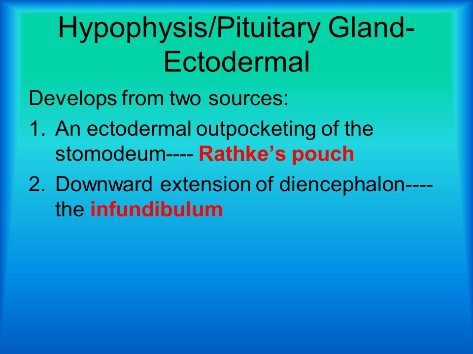 Hypophysis/Pituitary Gland-Ectodermal