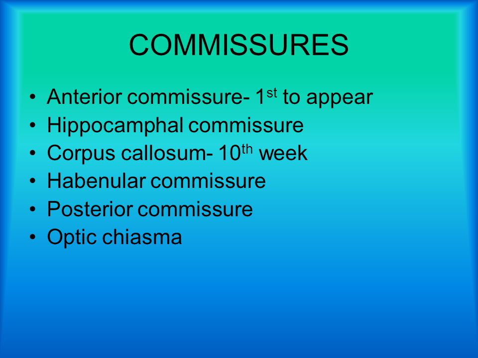 COMMISSURES Anterior commissure- 1st to appear Hippocamphal commissure