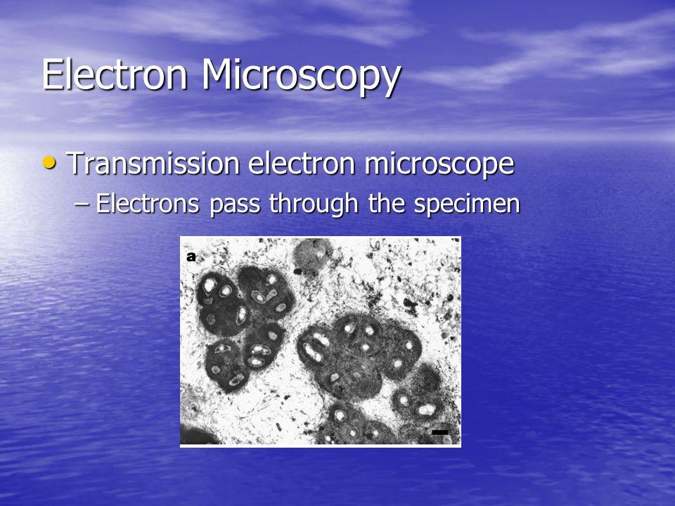 Electron Microscopy Transmission electron microscope