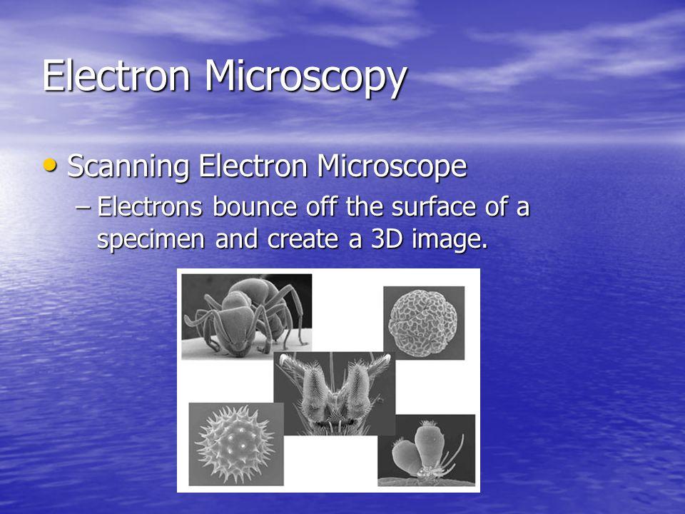 Electron Microscopy Scanning Electron Microscope