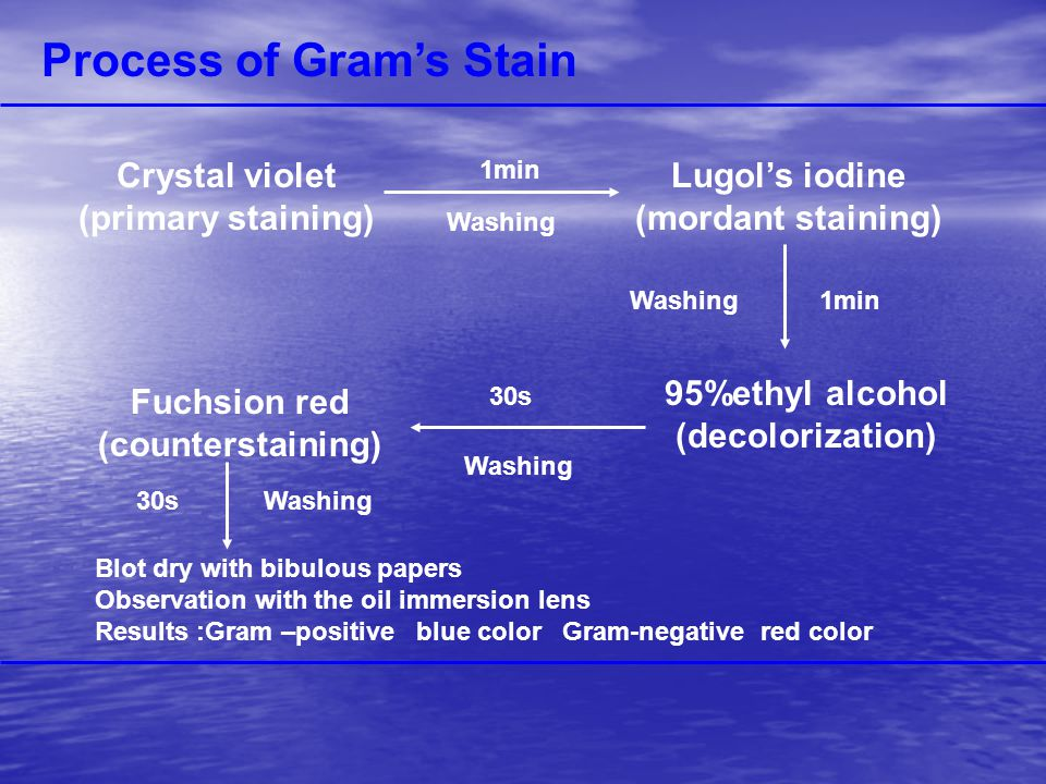 Process of Gram's Stain