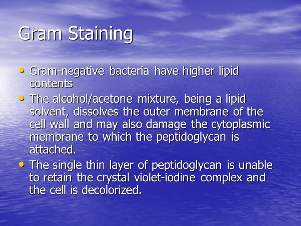 Gram Staining Gram-negative bacteria have higher lipid contents