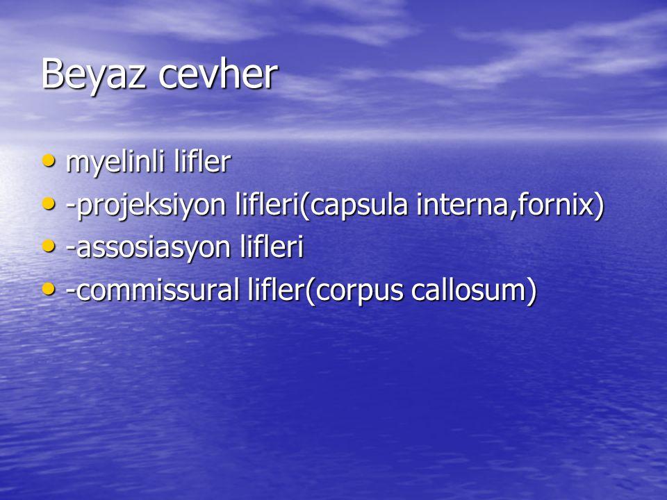 Beyaz cevher myelinli lifler