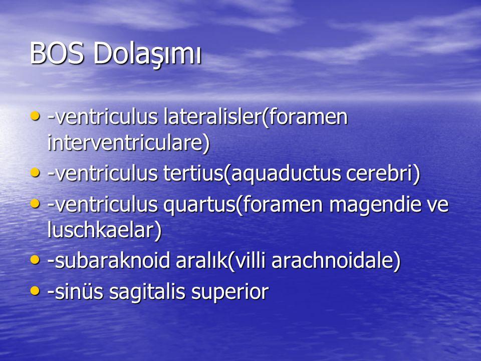 BOS Dolaşımı -ventriculus lateralisler(foramen interventriculare)
