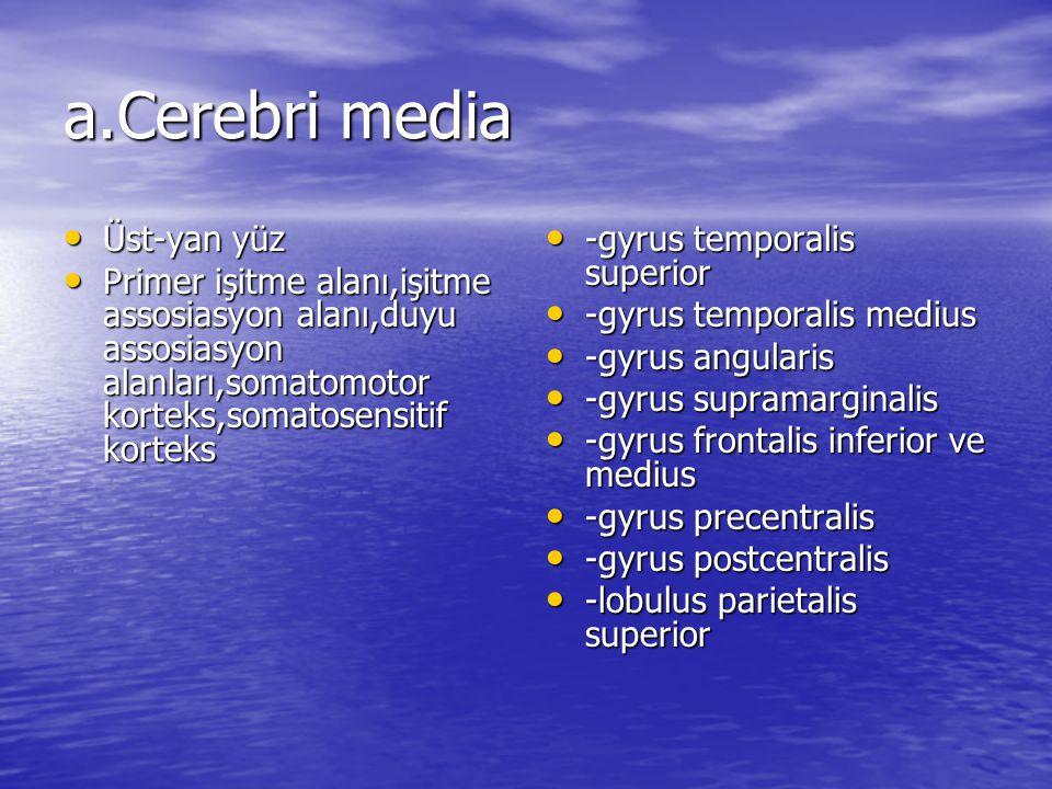 a.Cerebri media Üst-yan yüz