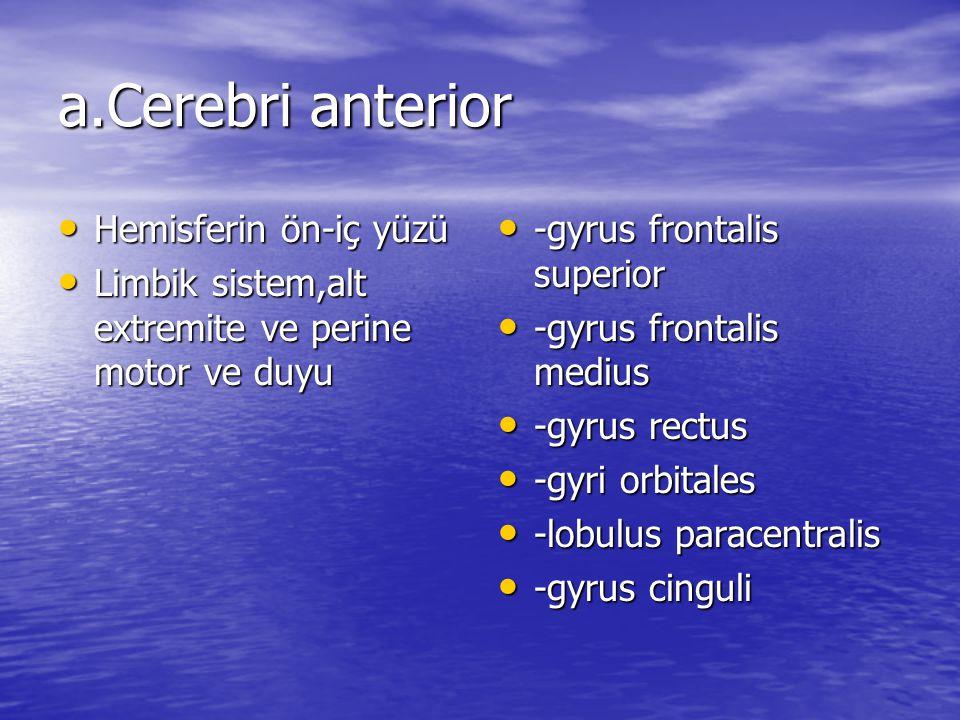 a.Cerebri anterior Hemisferin ön-iç yüzü