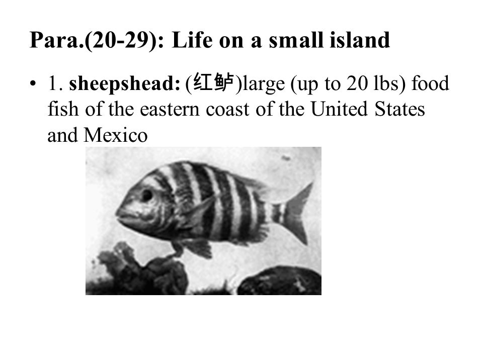 Para.(20-29): Life on a small island