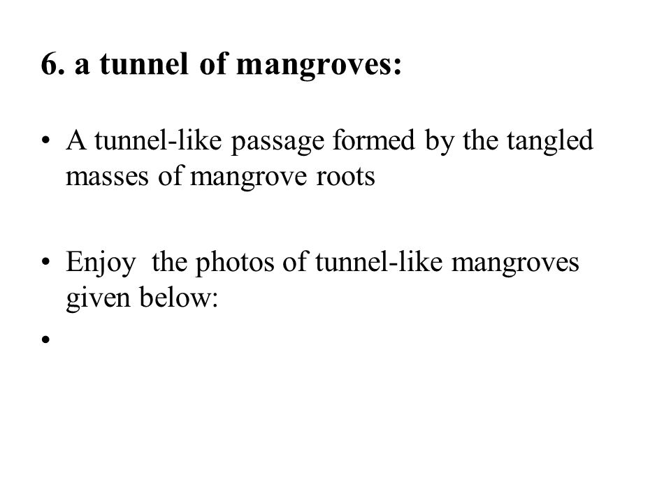 6. a tunnel of mangroves: A tunnel-like passage formed by the tangled masses of mangrove roots.