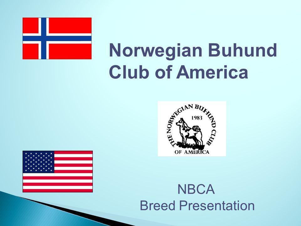 Norwegian Buhund Club of America NBCA Breed Presentation