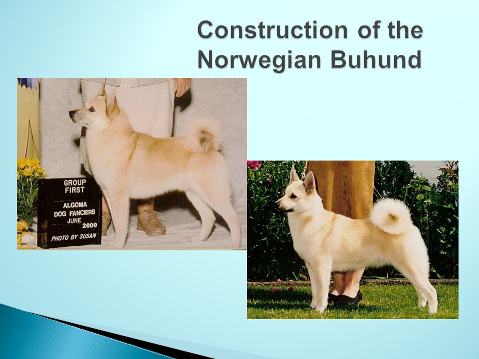 Construction of the Norwegian Buhund