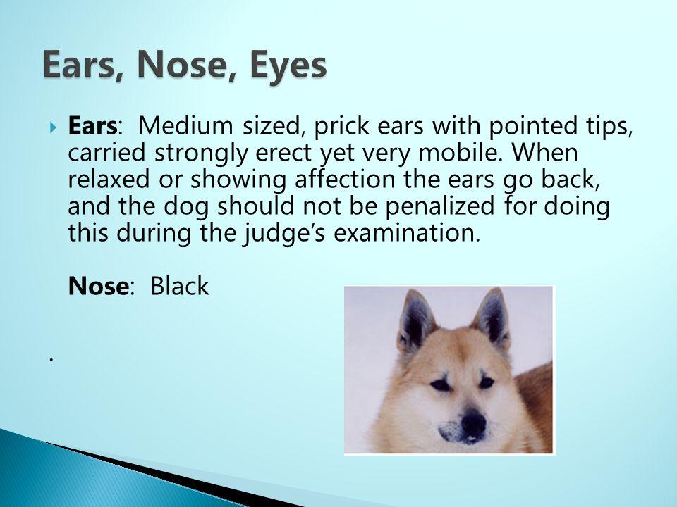 Ears, Nose, Eyes
