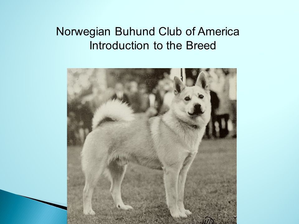 Introduction to the Breed