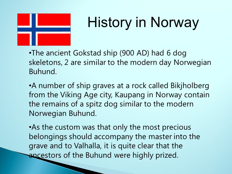 History in Norway The ancient Gokstad ship (900 AD) had 6 dog skeletons, 2 are similar to the modern day Norwegian Buhund.