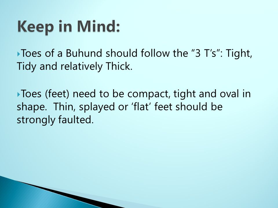 Keep in Mind: Toes of a Buhund should follow the 3 T's : Tight, Tidy and relatively Thick.