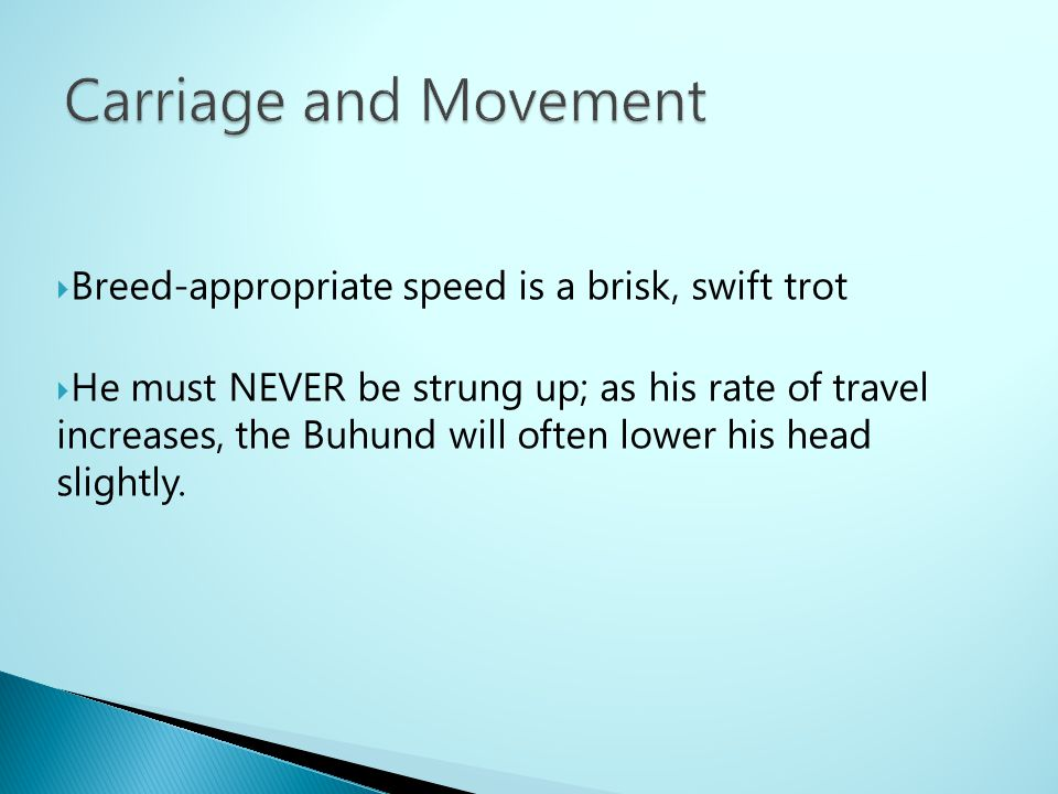Carriage and Movement Breed-appropriate speed is a brisk, swift trot