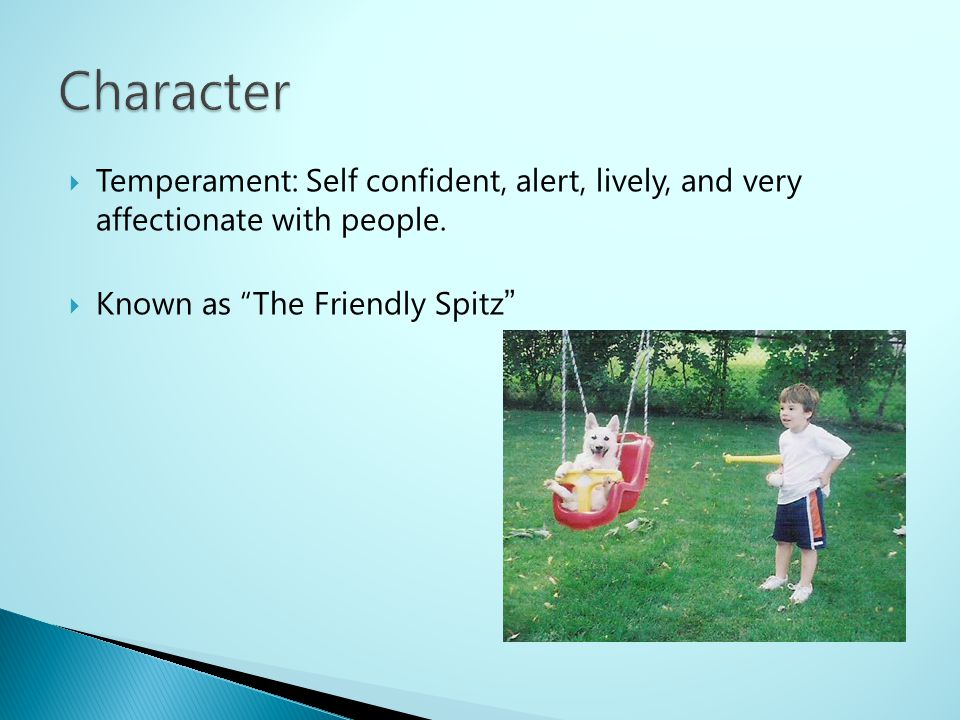 Character Temperament: Self confident, alert, lively, and very affectionate with people.