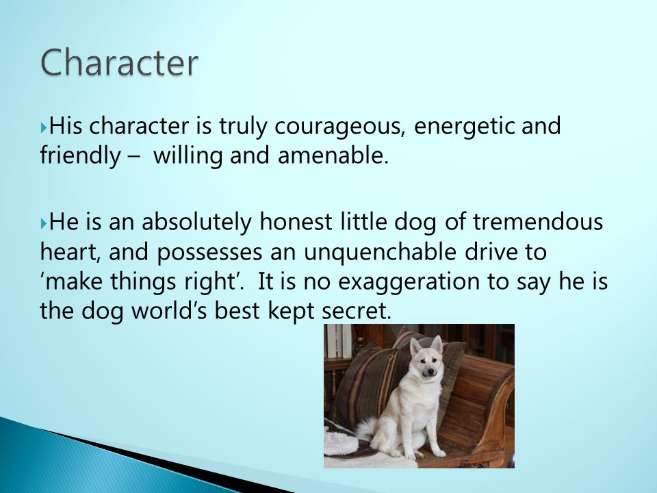 Character His character is truly courageous, energetic and friendly – willing and amenable.