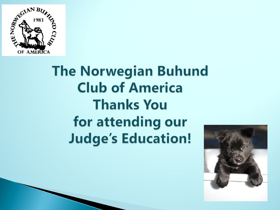The Norwegian Buhund Club of America Thanks You for attending our Judge's Education!