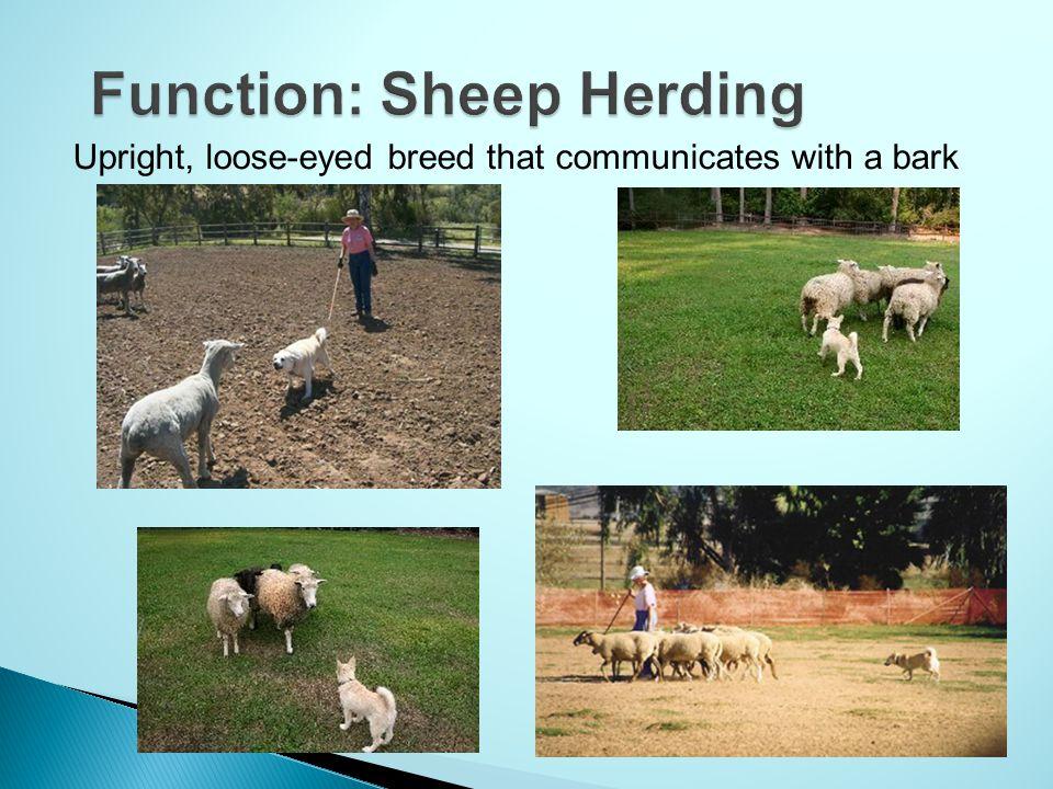 Function: Sheep Herding