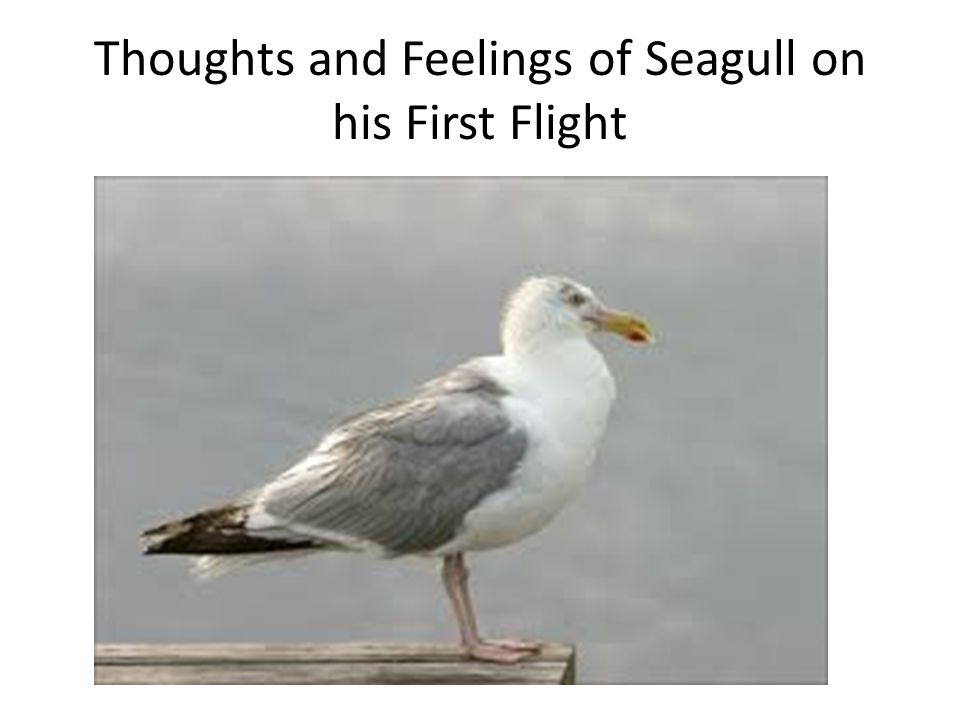 Thoughts and Feelings of Seagull on his First Flight