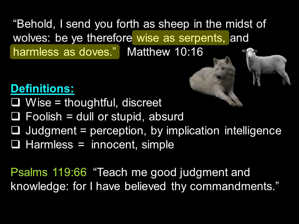 Behold, I send you forth as sheep in the midst of wolves: be ye therefore wise as serpents, and harmless as doves. Matthew 10:16