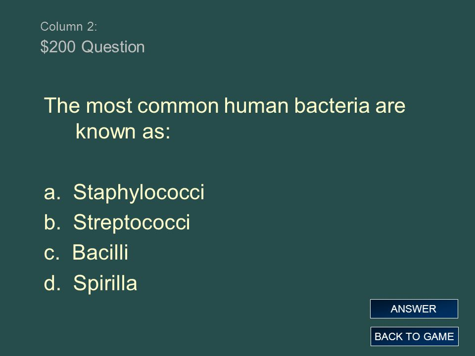 The most common human bacteria are known as: