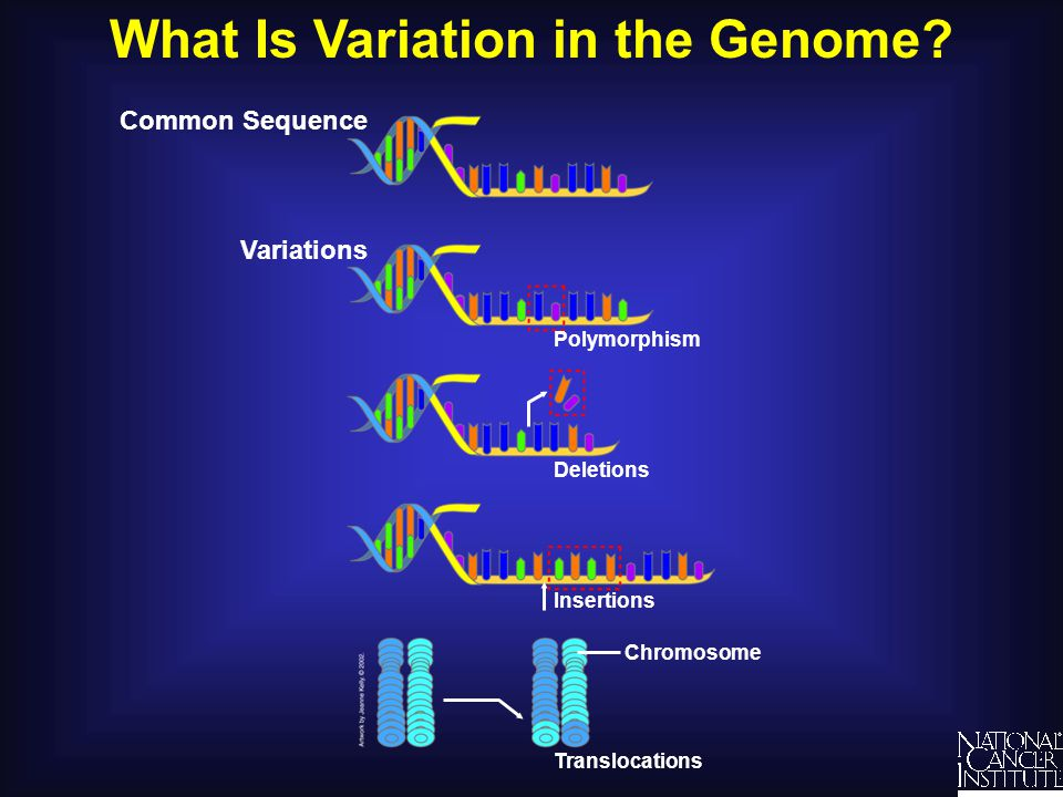 What Is Variation in the Genome