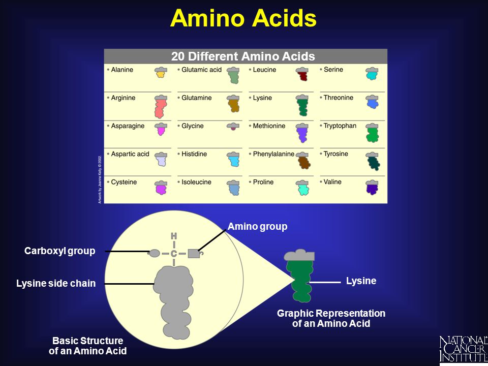 Amino Acids 20 Different Amino Acids Understanding SNPs and Cancer