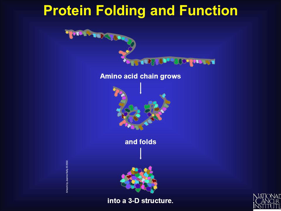 Protein Folding and Function