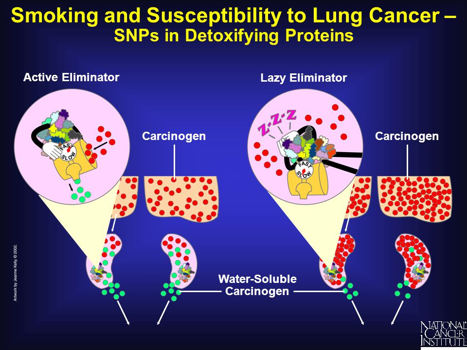 Smoking and Susceptibility to Lung Cancer –