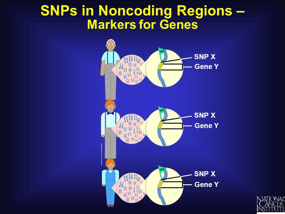 SNPs in Noncoding Regions –