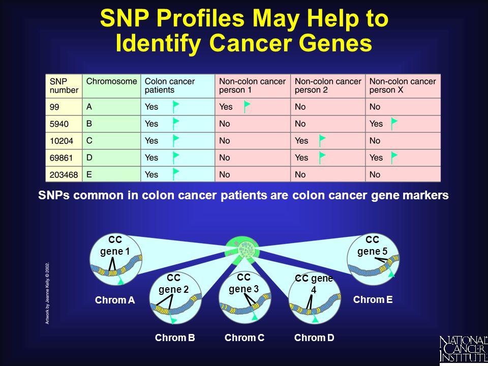 SNP Profiles May Help to Identify Cancer Genes