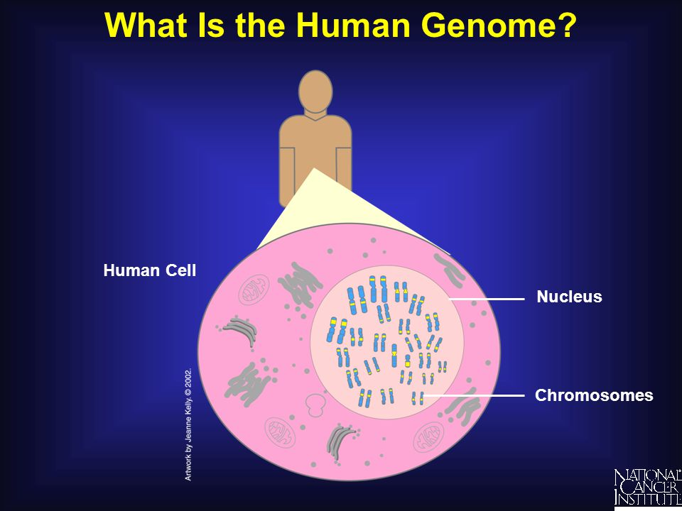 What Is the Human Genome