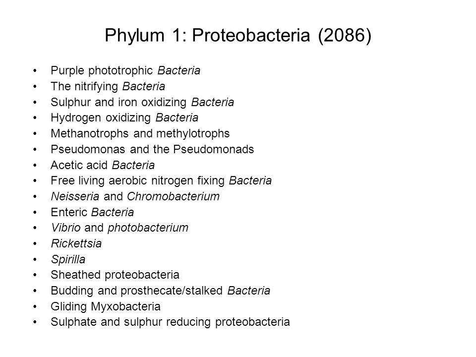Phylum 1: Proteobacteria (2086)