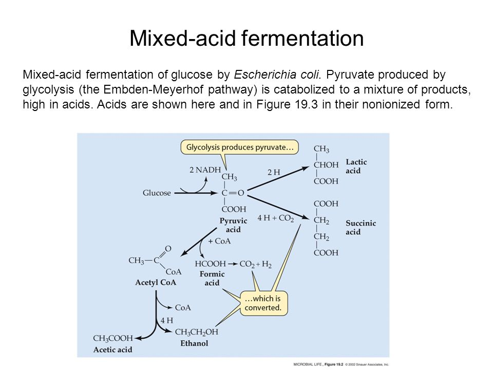 Mixed-acid fermentation