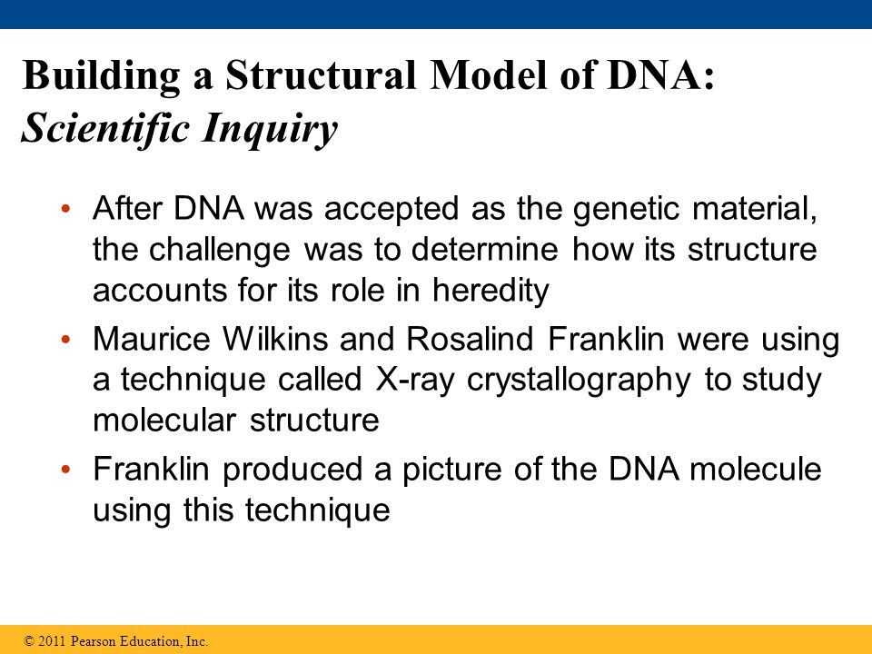 Building a Structural Model of DNA: Scientific Inquiry