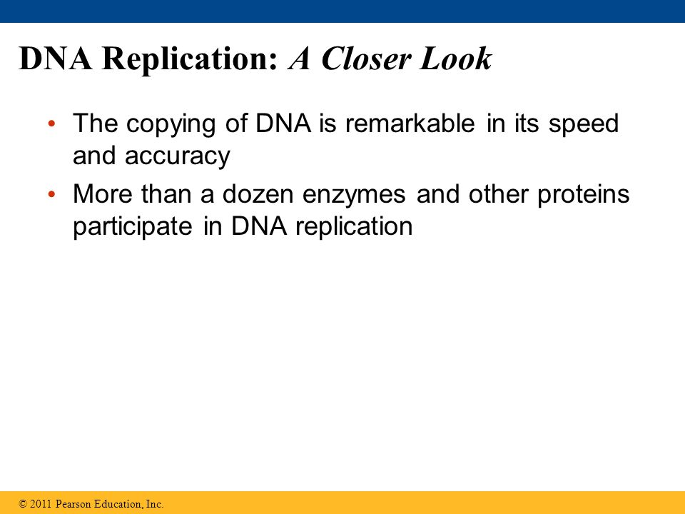 DNA Replication: A Closer Look