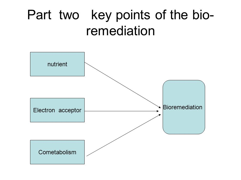 Part two key points of the bio-remediation