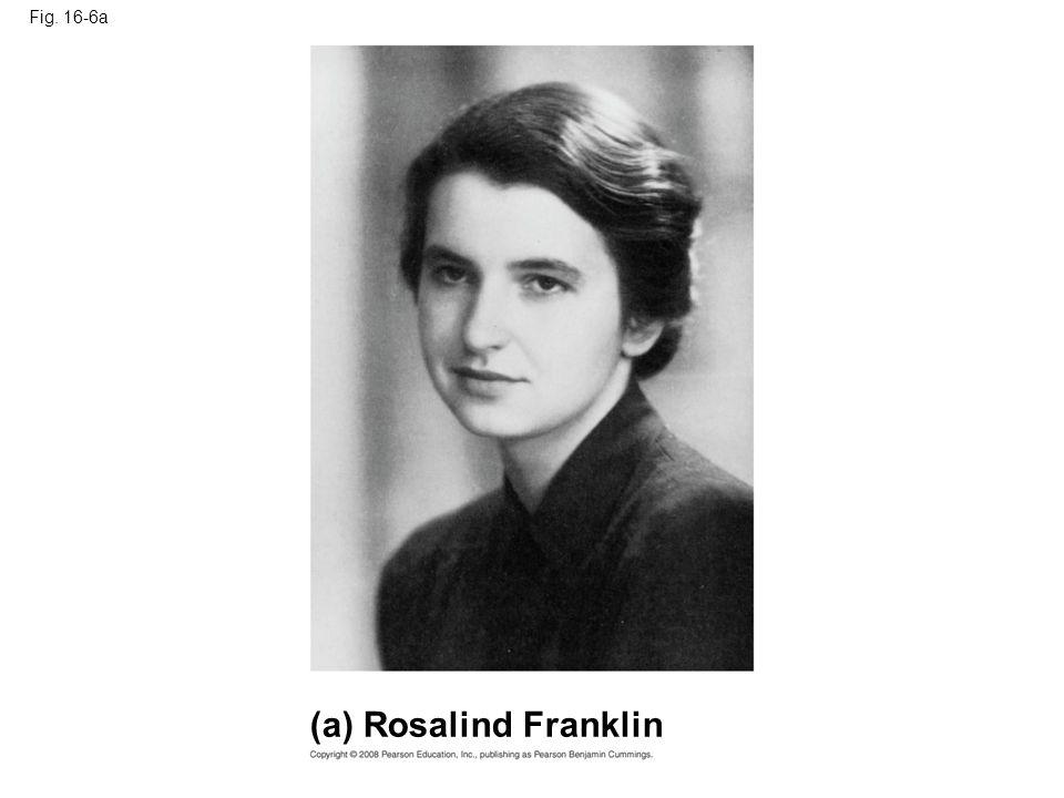 (a) Rosalind Franklin Fig. 16-6a