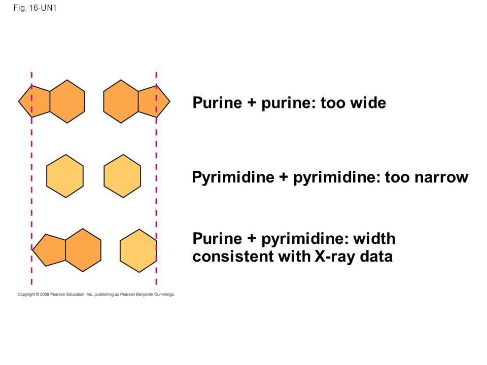 Purine + purine: too wide
