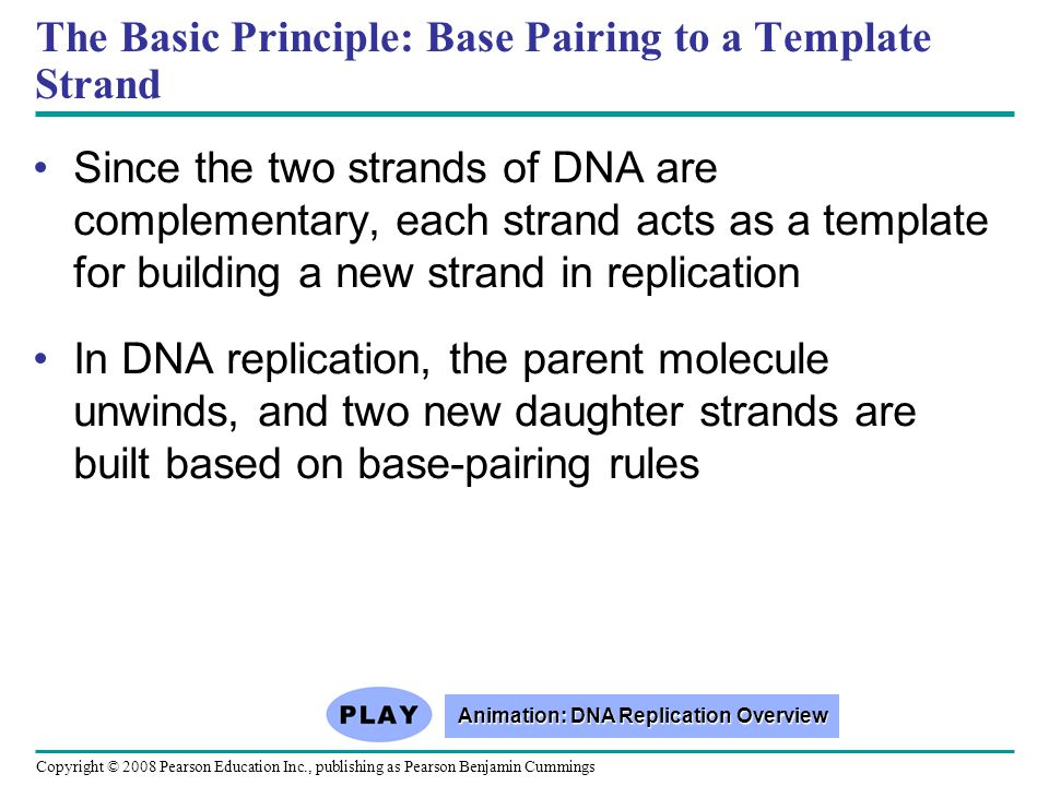 The Basic Principle: Base Pairing to a Template Strand