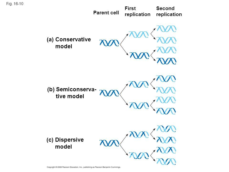 (a) Conservative model