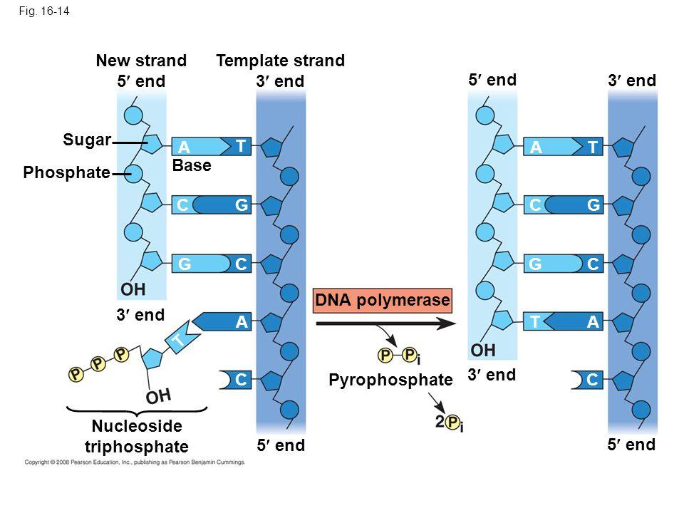 Nucleoside triphosphate