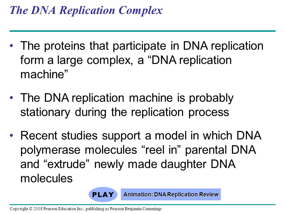 The DNA Replication Complex
