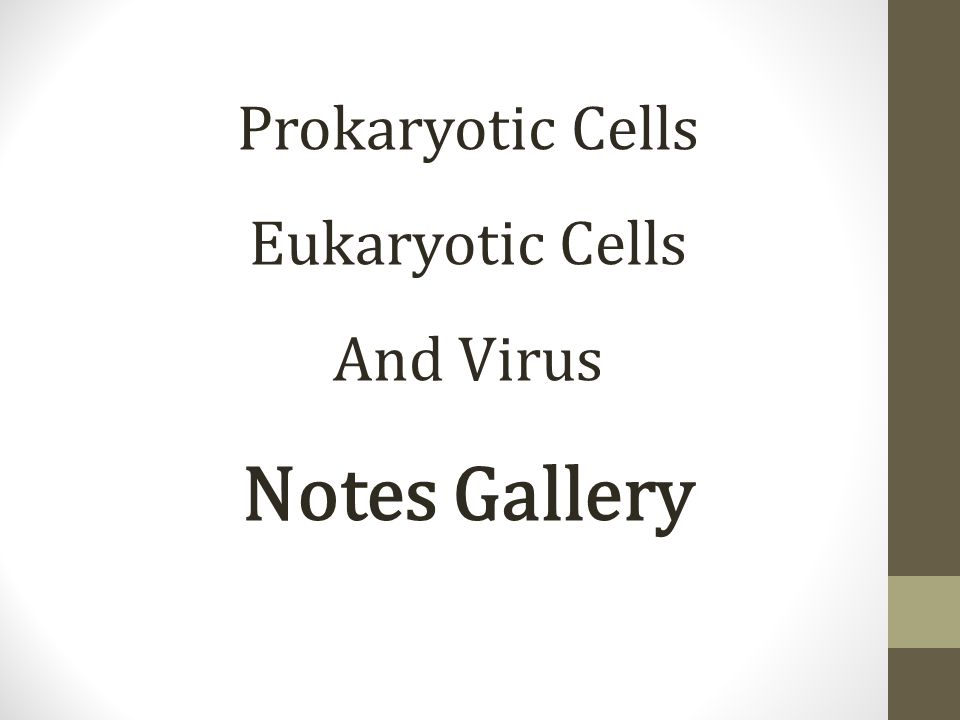 Prokaryotic Cells Eukaryotic Cells And Virus Notes Gallery