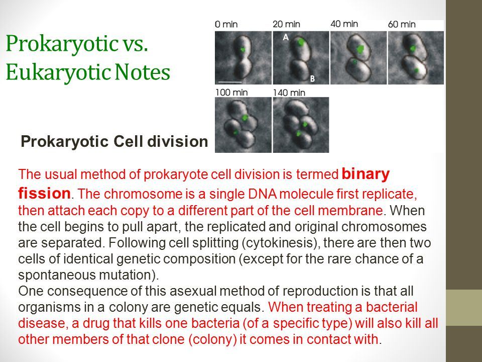 Prokaryotic vs. Eukaryotic Notes