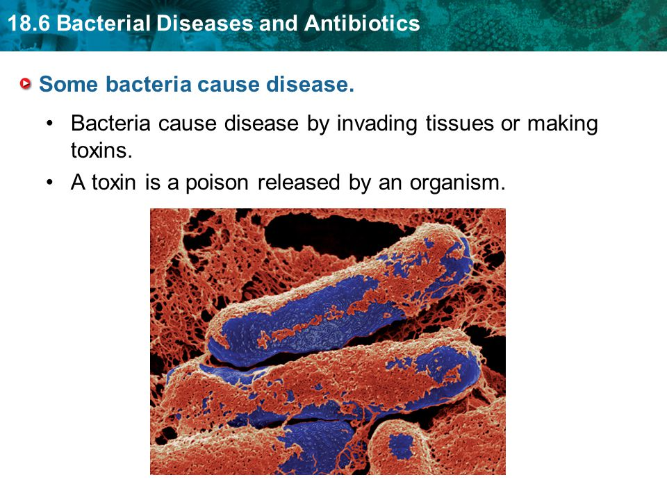 Some bacteria cause disease.