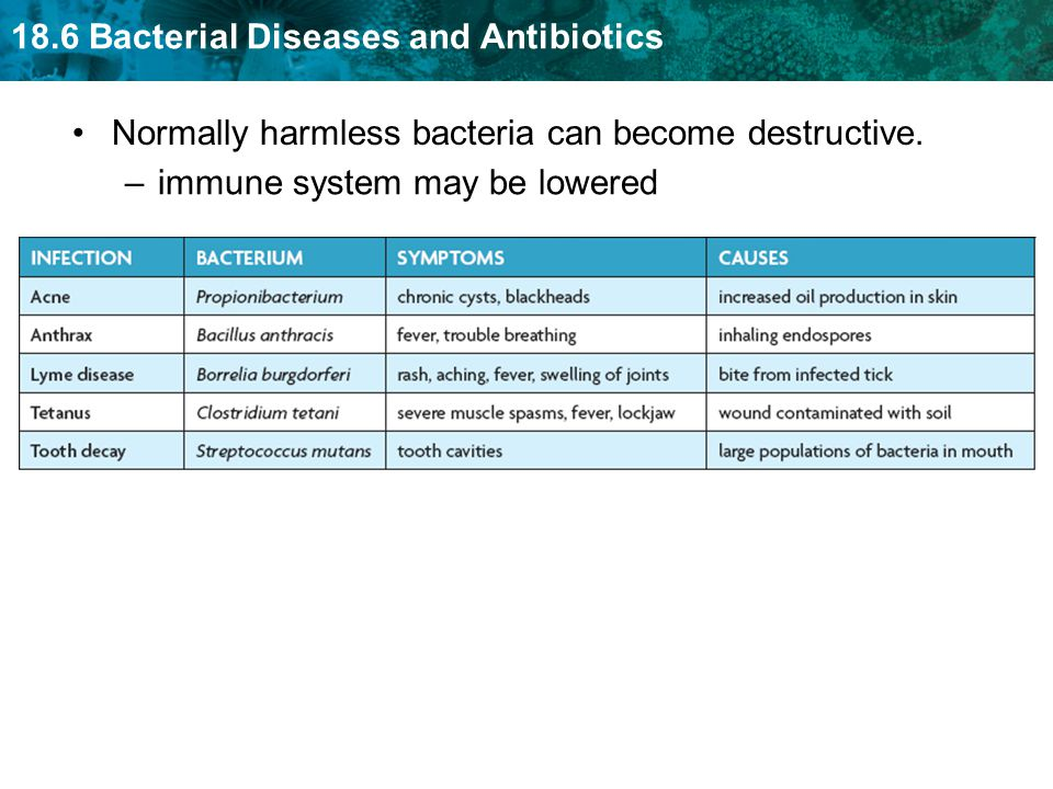Normally harmless bacteria can become destructive.